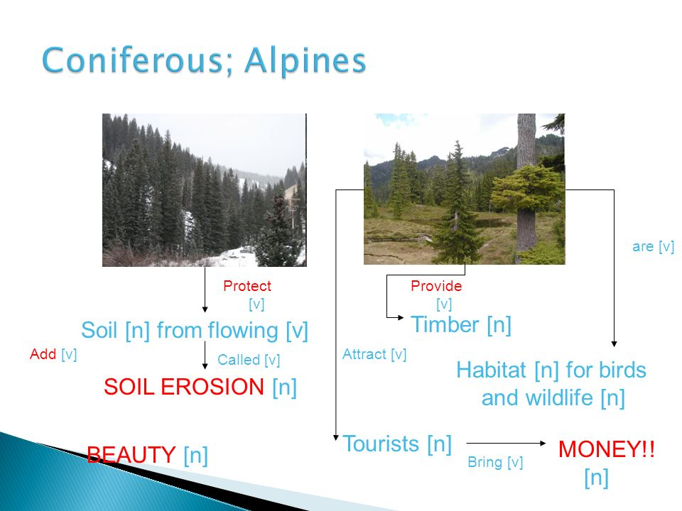 Coniferous; Alpines Timber [n] Soil [n] from flowing [v]